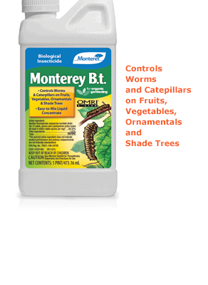 Monterey_B.t_pt_LG6332